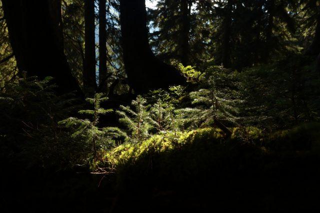 Festival / Nesmrteľný les