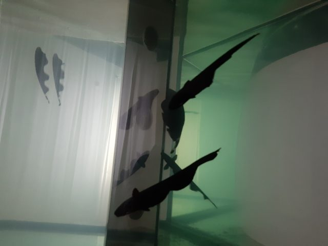 Noc múzeí a galérií 2020 / CUM Natura – LIVE